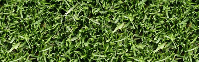 Болезни газона: снежная плесень, мучнистая роса, ржавчина и красная нить