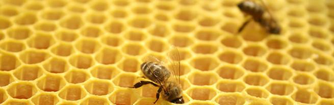 Двухматочное пчеловодство в лежаках — ощутимая добавка к сбору