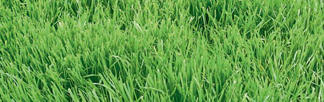 Как посеять газонную траву правильно, чтобы получить идеальную зеленую лужайку