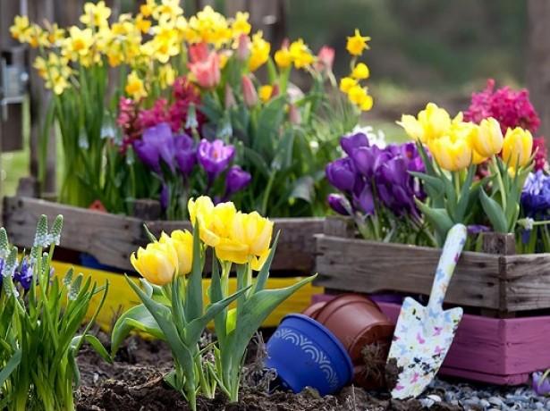 Когда сажать тюльпаны лучше всего – в середине осени или ранней весной?