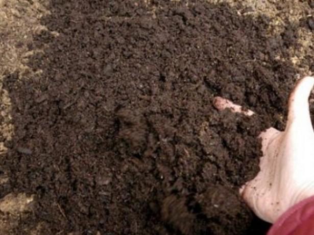 Посадка фасоли и уборка урожая в положенный срок
