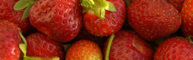 Свежая клубника в январе или возможно ли вырастить клубнику дома?